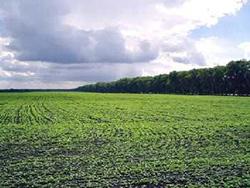 межевание земельных участков сельскохозяйственного назначения